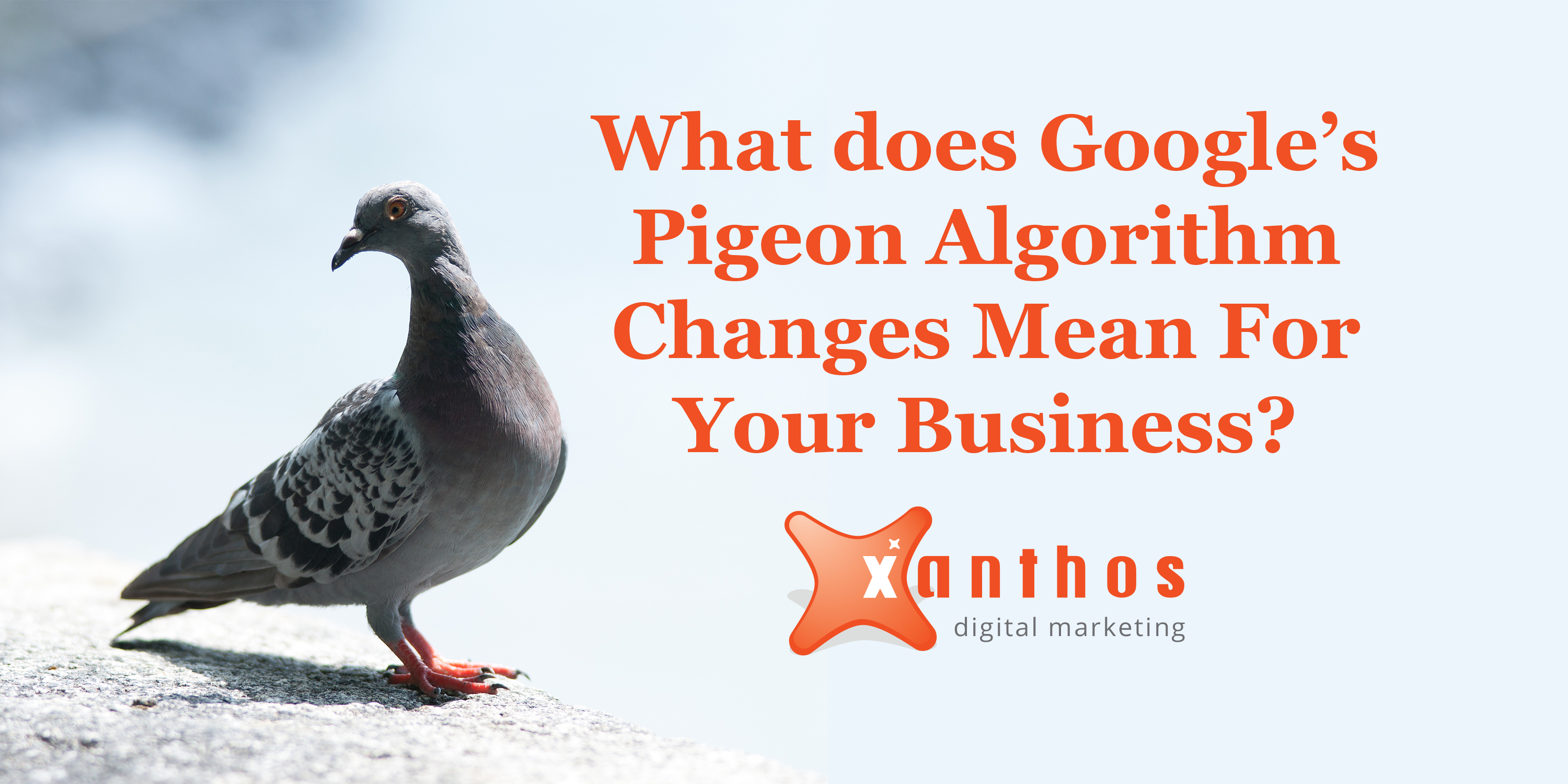 pigeon google update social blog